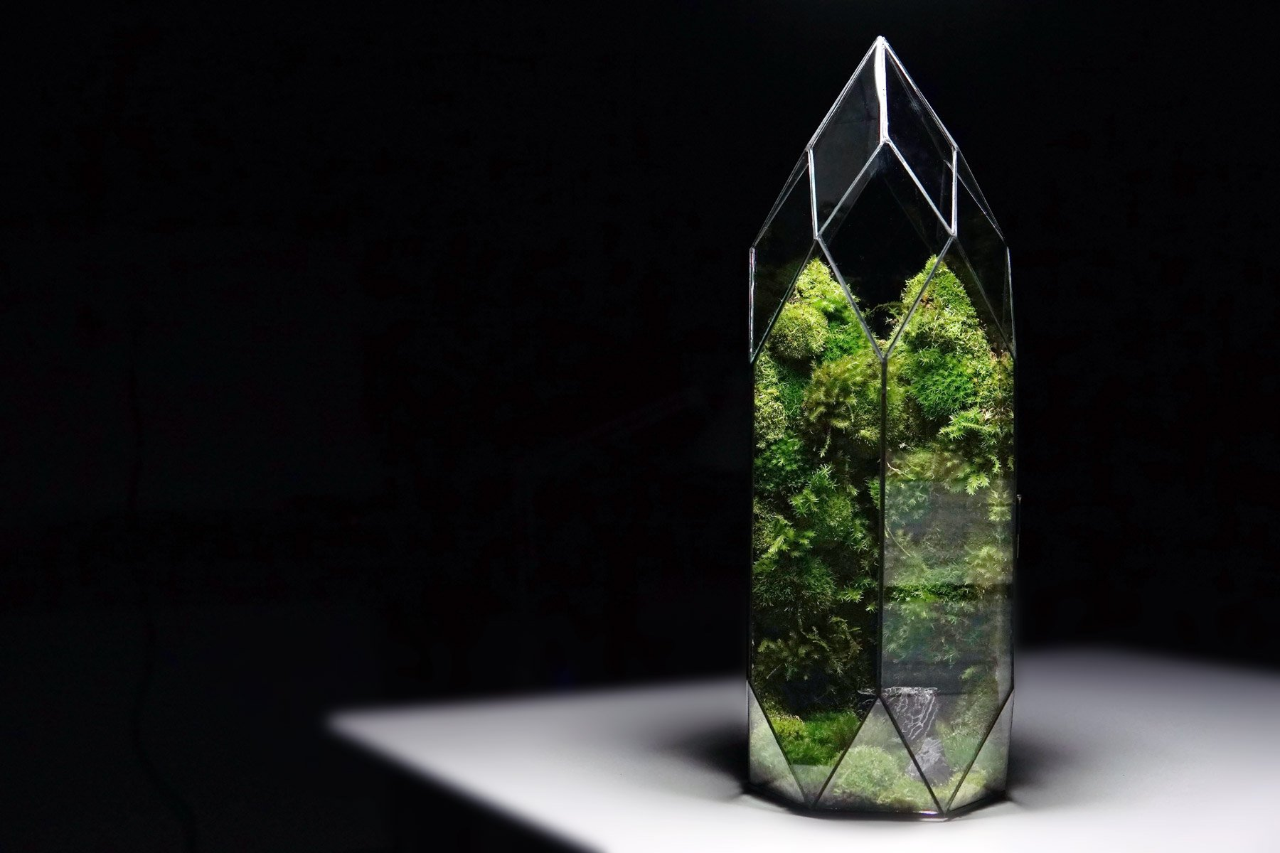 Awesome Miniature Ecosystem From TerraLiving